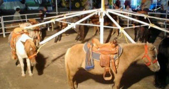 Valencia prohibirá dar licencias a circos con animales salvajes y a ferias que utilicen animales