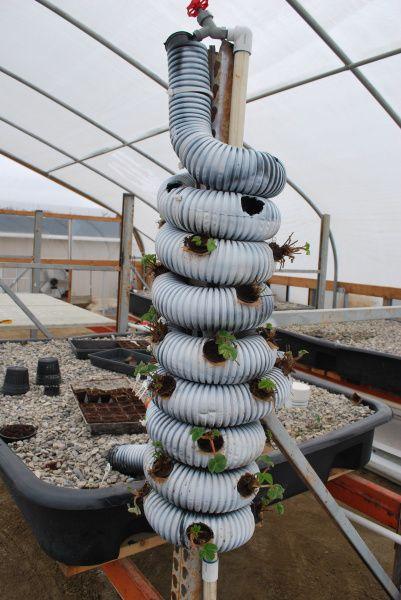 Aquaponic Strawberry Tower