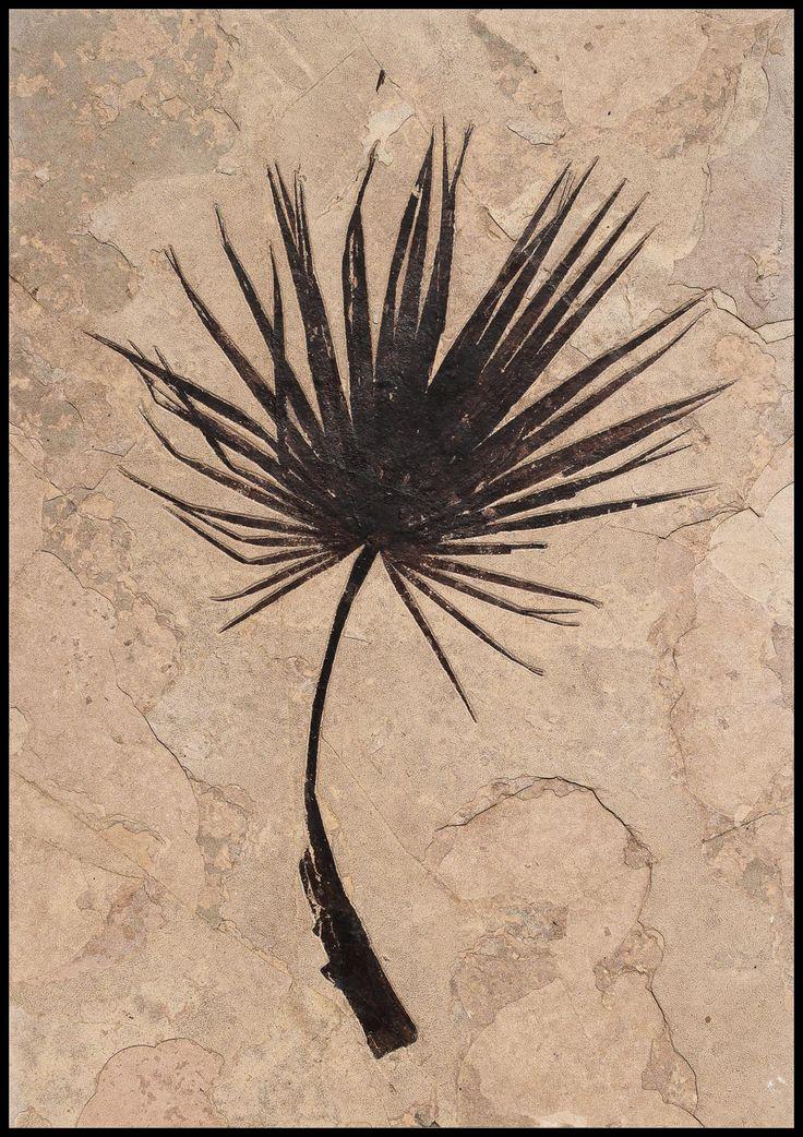 Les 796 meilleures images du tableau végétaux fossiles sur ...