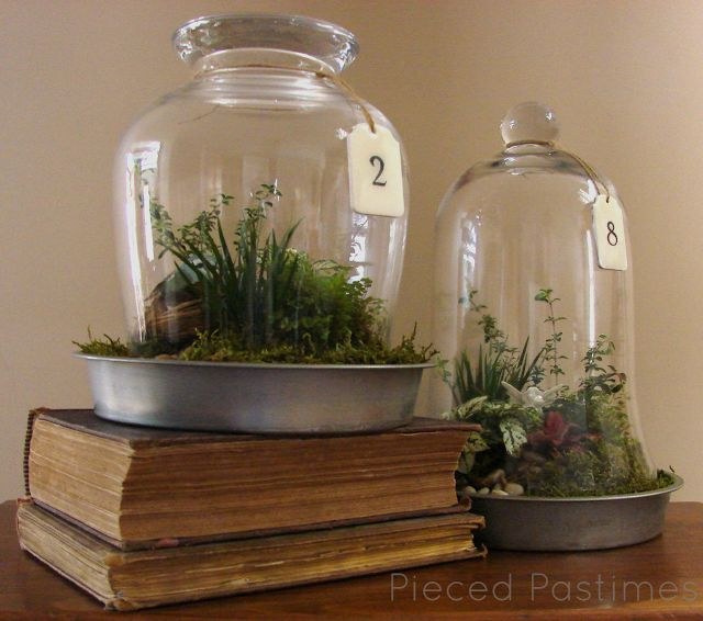 terrarium craft ideas 30 best decorate images on apothecaries glass 3066