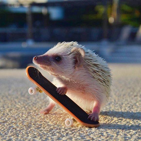 hedgehog-instagram-6