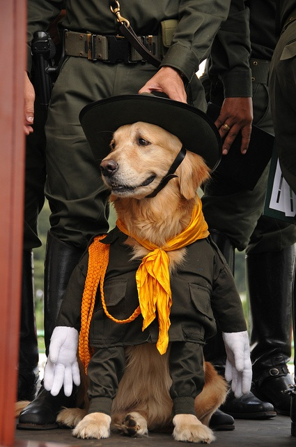 Porque nuestros perros también son héroes les hicimos un homenaje especial.