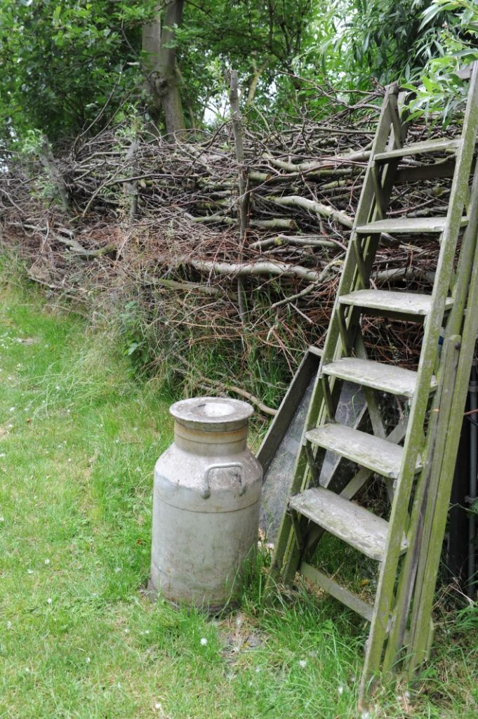 Natural hedging, use hazel instead & use for the boundaries.  Use some in the immediate cottage garden boundaries