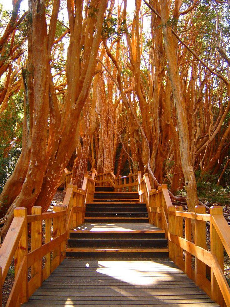 Bosque de Arrayanes – Villa La Angostura