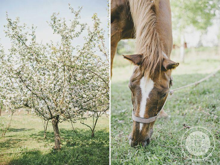 http://dreameyestudio.pl/ #tree #summer #horse #dreameyestudio