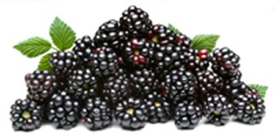 how to make blackberry jelly