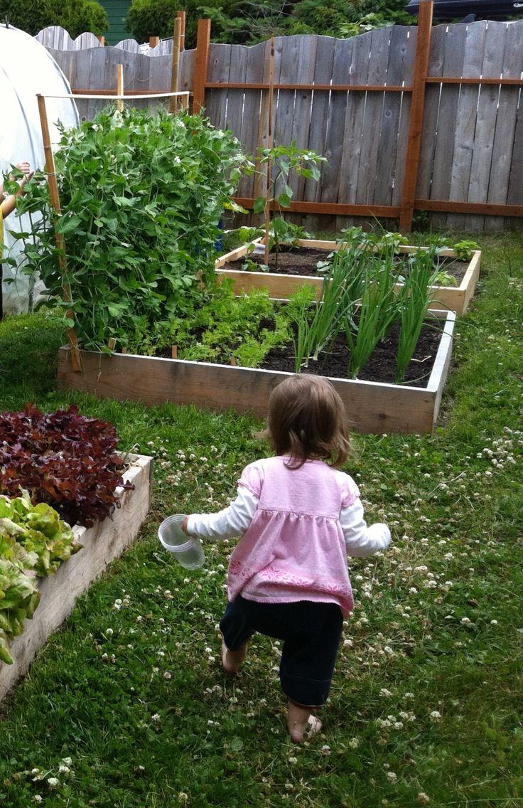Políčko na pestovanie zeleniny