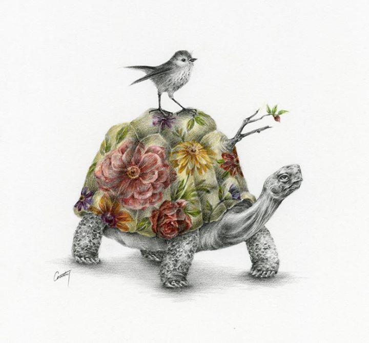 tortoise drawing for pinterest - photo #30