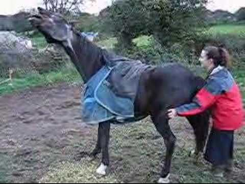 Oh Yeah Scratch Were I Itch Horses Pinterest Horses Horse Videos And Dogs