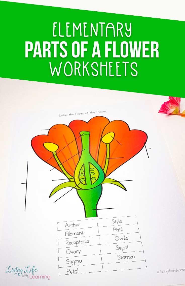 Parts Of A Flower Worksheet Parts Of A Flower Homeschool Science Curriculum Kindergarten Science Curriculum Parts of flower worksheets
