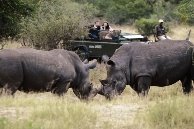 Explore south africa at your own pace with a Classic Cape & Safari - 10 day Self Drive Itinerary with African Welcome.  http://www.africanwelcome.com/tours-and-safaris-south-africa-botswana-namibia-vicfalls/self-drive-holidays-south-africa/10-day-self-drive-cape-town-winelands-kruger-park