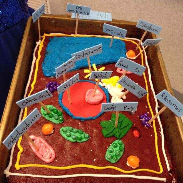 plant cell project, plant cell structure, simple plant cell plant cell organelles, plant cell project materials