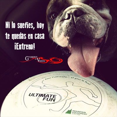 #UltimateFrisbee #Deportes #GuerrerosdelViento #Diversión