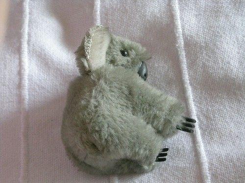 Koala bear pinchy thing, I still have it. by trudy