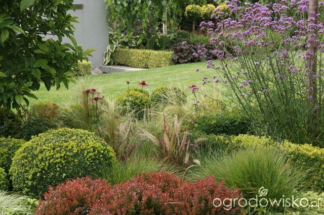 Madżenie ogrodnika cz. aktualna - strona 710 - Forum ogrodnicze - Ogrodowisko