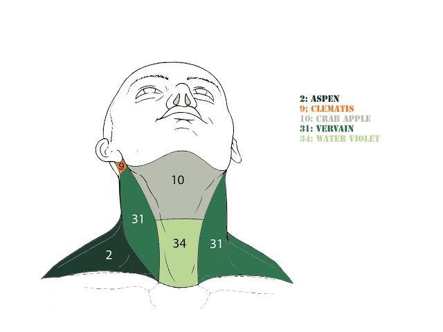 Terapia Floreale Blog: CONSIGLI PRATICI SULL'UTILIZZO DELLA FLORITERAPIA NELLA PRATICA QUOTIDIANA