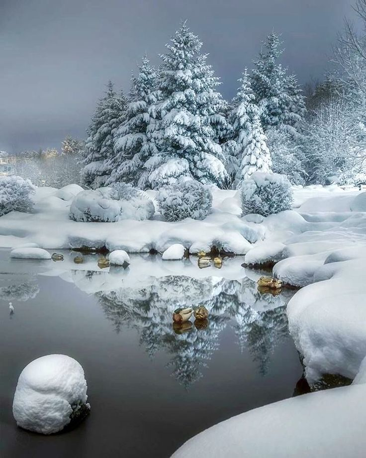 Winter beauty