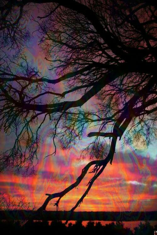Psychedelic tree branch