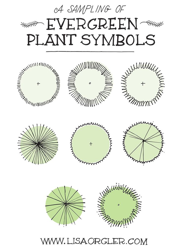 Drawing Plant Symbols by Lisa Orgler