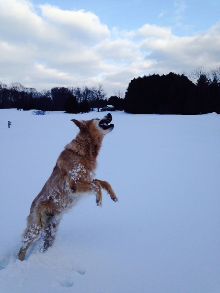 Active dog on the golf course