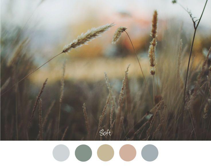 Gras op een vage achtergrond. Prachtige zachte kleuren combinatie voor in het interieur roze - groen - blauw - grijs