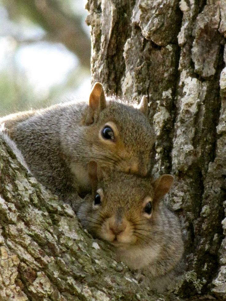 Two of my little squirrels.