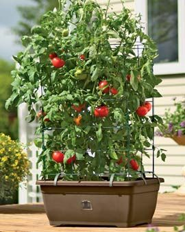 Tomato Garden Ideas sweet tomato garden stunning ideas 32436 Find This Pin And More On Container Tomatoes