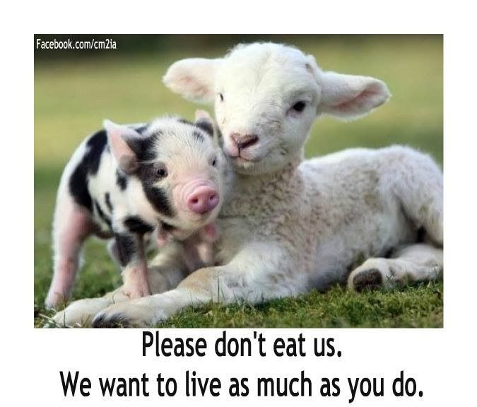 Pinterest Animal Quotes: 33 Best Animal Quotes And Visuals Images On Pinterest