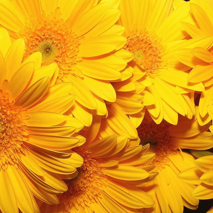 Best 25+ Yellow Flower Pictures Ideas On Pinterest