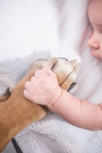 Tips for getting your fur-baby ready for your human baby.