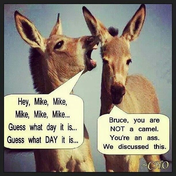 Wednesday hump day joke