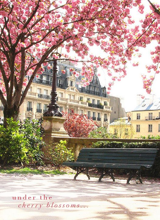 FranceCherries Blossoms, Benches, Parks, Beautiful, Paris France, Travel, Places, Spring, Cherry Blossoms