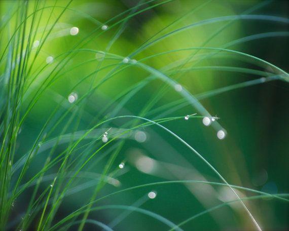 Green Grasses & Water Droplets Photo, Botanical Print, DEW DROPS on GRASSES No. 1, Green Chartreuse, Gift Grad Gardener, Dreamy Wall Decor