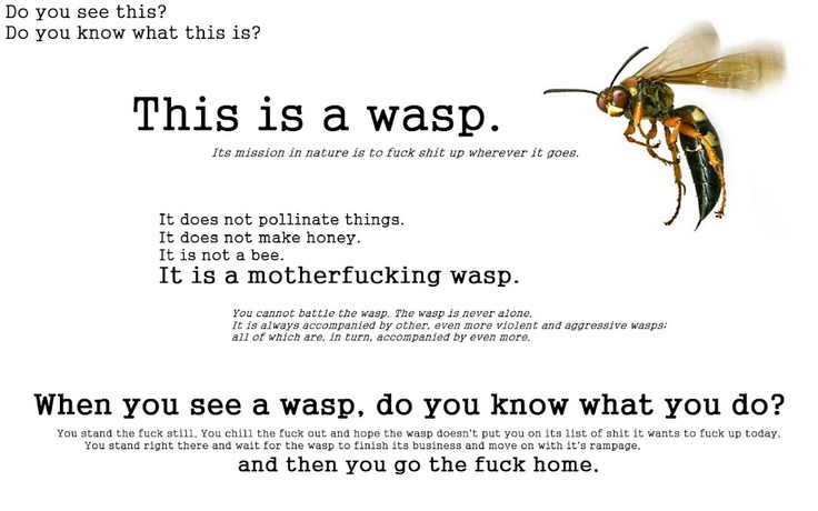 Wasp dirty fucker