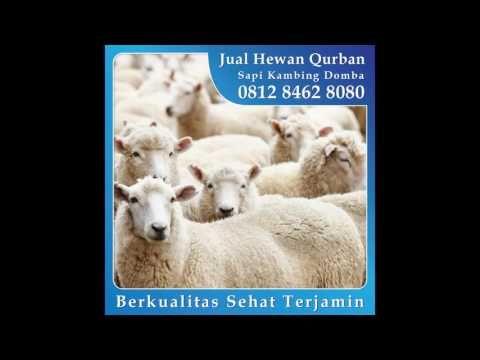 0812_8462_8080 (Tsel) Jual Hewan Qurban di Sawah Besar Pasar Baru Juanda