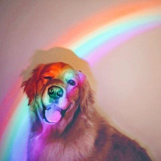 Rainbow love  cute | Puppy | Dog | animal | pets