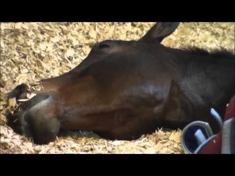 The Life of a Dressage Horse featuring Carl Hester and Charlotte Dujardin on BBC • Meet Carl Hester and his team and see Charlotte Dujardin riding Valegro after the Olympics *  Here is Charlotte Dujardin on CNN