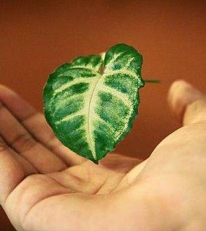 Rimedi naturali per mani screpolate e secche | Ambiente Bio