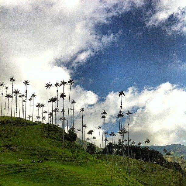 Valle del cocora!!!!