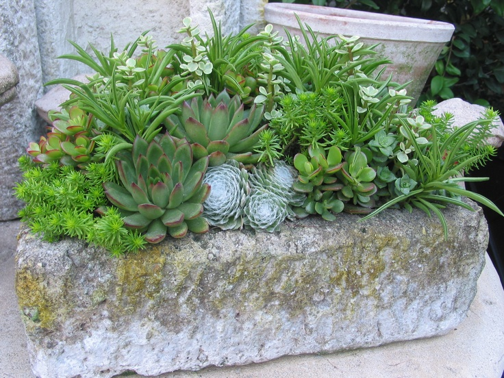 rustic container: Containergarden, Succcuulentttt, Container Garden, Succulent Container, Ideas Para, Window Boxes