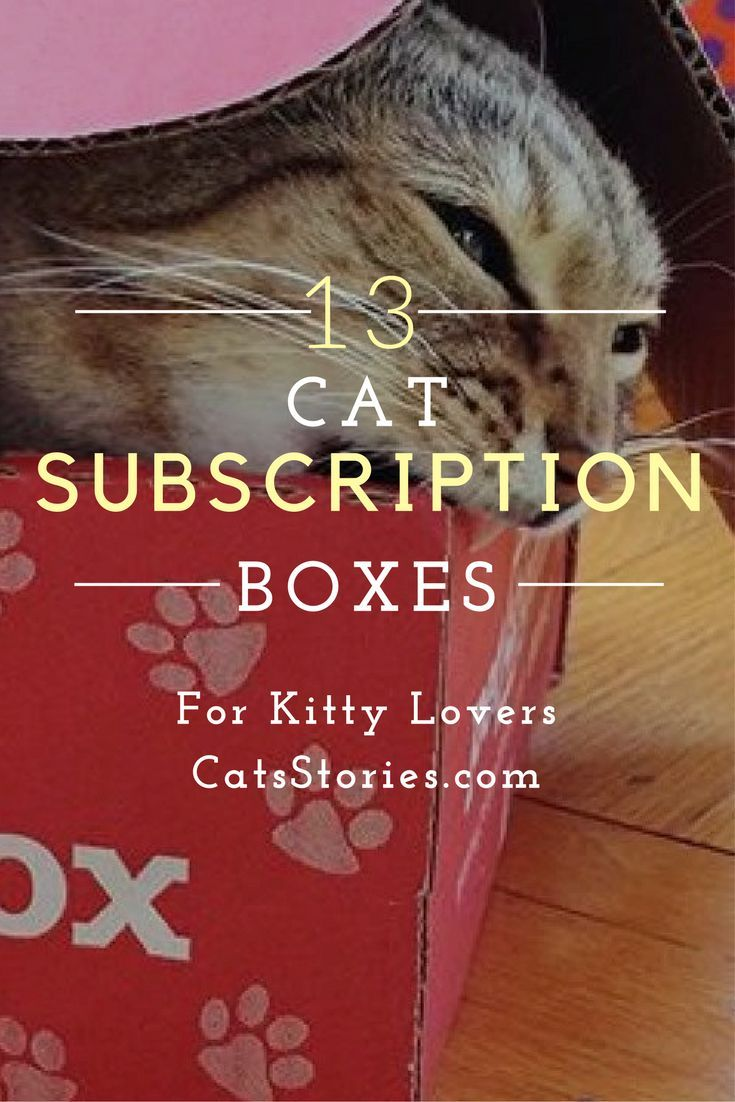 13 Cat Subscription Boxes for Kitty Lovers   CatsStories.com