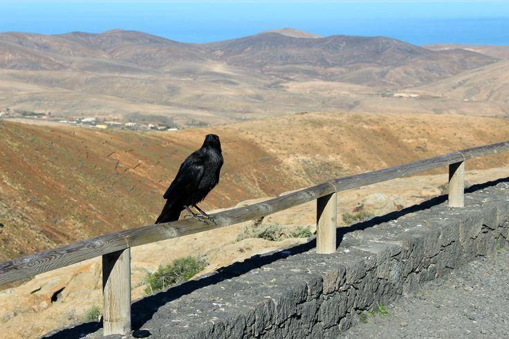 Pełen ciekawych zdjęć wpis, w którym opisuję zwierzęta Fuerteventury, które…