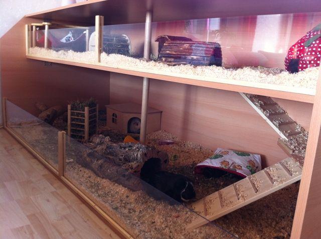 Meerschweinchen Ratgeber: eure käfige oder eigenbauten