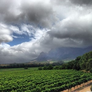 The Vrede en Lust vineyards - via by THE POINTS GUY