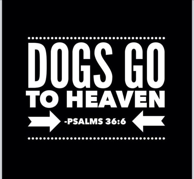Psalms 36:6 Dogs Go To Heaven .... It's possible that they deserve heaven even more than we do since they are so innocent