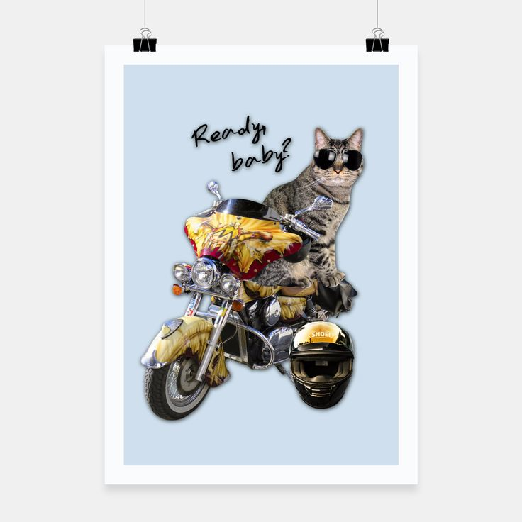 COOL CAT Poster, Live Heroes