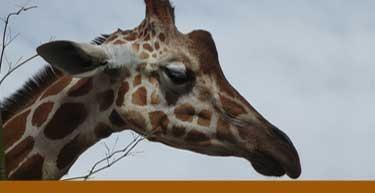 Rio Grande Zoological Park Albuquerque New Mexico