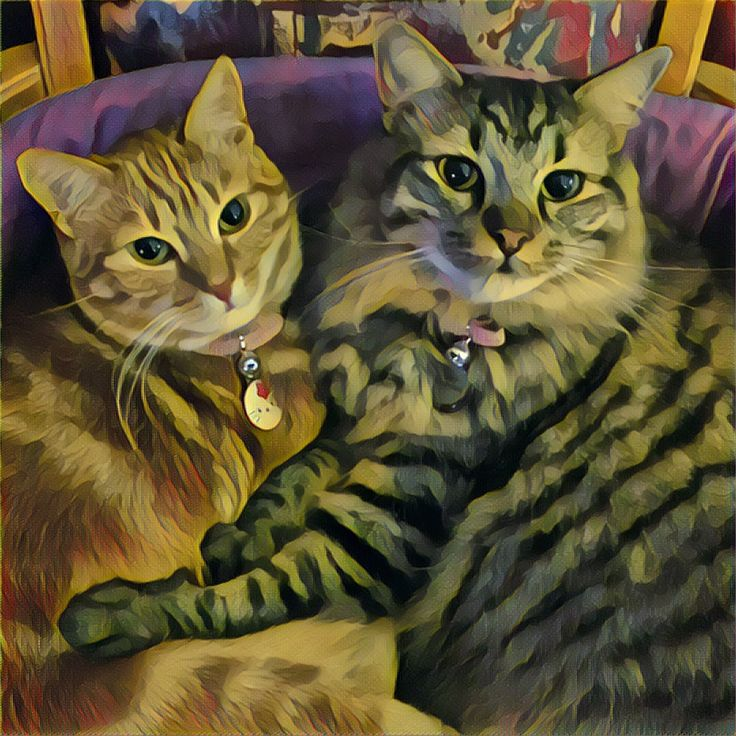 Sister love #cats #fluffy animals pets sweet