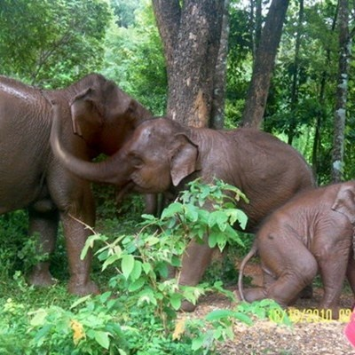 Connect with Elephants - an incredible experience
