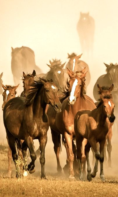 equine -- sometime in my life--- want to see a wild horse stampede